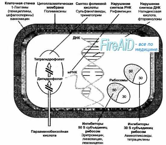 Антибактериальные средства. Антибактериальные препараты. Антибиотики. Классификация антибиотиков