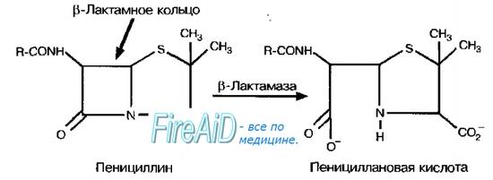 Механизмы формирования лекарственной устойчивости у бактерий. Ферментативная инактивация лекарственных средств ( лс )