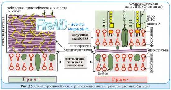 Устойчивость микроорганизмов к препаратам. Химиорезистентность у бактерий. Устойчивость несвязанная с наследственностью возбудителей