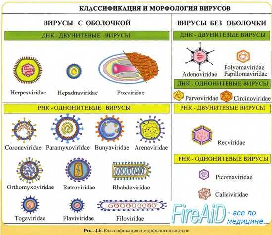 Химиорезистентность у вирусов. Резистентность вирусов к терапии ( к лекарственным средствам ). Устойчивость вирусов к ацикловиру