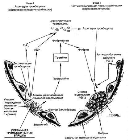 Механизм образования тромба