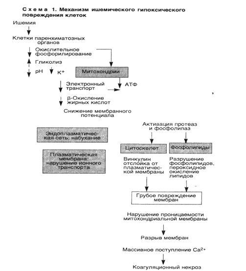 Морфология повреждения клеток реферат 8931