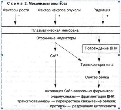 Морфология повреждения клеток реферат 6398