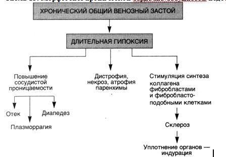 в плевральной — гидроторакс